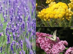 Summer flowers...discover the beauty properties