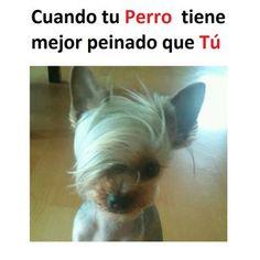 #memes #chistes #humor #funny #invequa #perro #perros