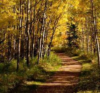 Autumn path, Fish Creek Provincial Park, Alberta, Canada