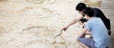 """""""Sur les traces des géants"""" Courtedoux (dino footprints)"""