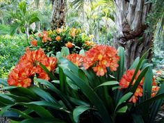 nz sub-tropical garden - Google Search