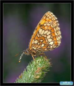 бабочка цветку предпочла еловую ветку