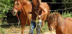 Das Pferd muss instinktiv entscheiden ob ein Wesen gefährlich ist… ob es nötig ist zu fliehen. Es sollte so auch für die Menschen sein. Ostkreta.