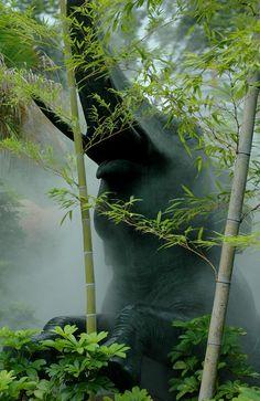 ♂ Elephant behind the bamboo