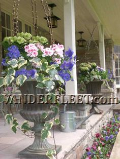 VF210   Fresh Spring Outdoor Planter by VANDERFLEET.   The focal point of this fresh & elegant design is the Hydrangea (or Hortensia). The lush under planting of assorted cool tolerant annuals and trailing vines add to the overall look.