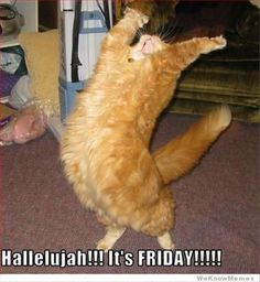Happy #Friday! #TGIF
