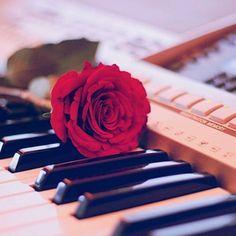 #ShareIG الحبُّ عزفٌ في قلوبٍ مرهفةْ أوتارُها الأشواقِ أعيت أحرفهْ واللحنُ صوتٌ هامسٌ في نبضِها أوَّاه من قلبٍ رعى من أتلفهْ ! By @msahri_pro2