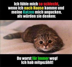 """Katze & Urlaub """"Du warst für immer weg!"""""""