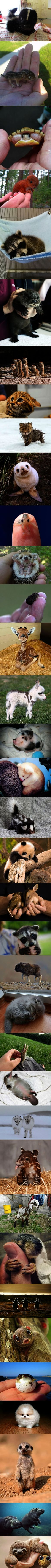 No way... Cutest Animals Ever Tumblr :D