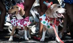 Down to clown: two dogs look set for tomfoolery as they look around for mischief at the Rio dog carnival