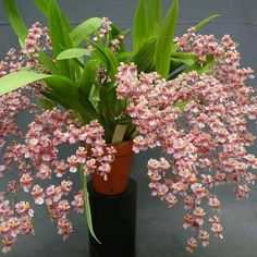 Orchids ..