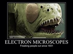 Electron microscopes.   Freaking people out since 1931.