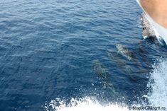 Croazieră la Muntele Athos - Grecia | Blog de Calatorii Waves, Blog, Outdoor, Outdoors, Blogging, Ocean Waves, Outdoor Games, The Great Outdoors, Beach Waves