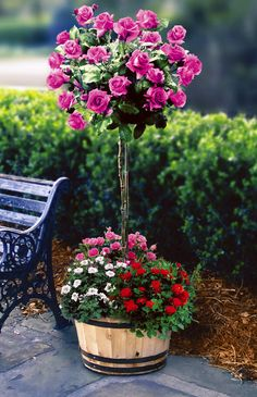 rose trees in planter boxes Container Plants, Container Gardening, Vegetable Gardening, Succulent Containers, Container Flowers, Flower Planters, Amazing Flowers, Beautiful Flowers, Beautiful Things