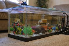 What To Expect From Aquarium Coffee Table R