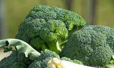 Di Cicco Broccoli Seeds Qty. 200