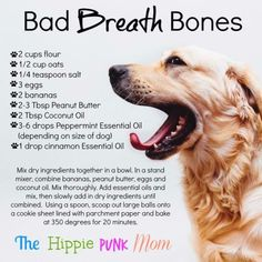 Your dog animals Bad breath dog bones recipe DIY essential oils Dog Treat Recipes, Dog Food Recipes, Food Tips, Dog Biscuit Recipes, Cookie Recipes, Yorkshire Terrier, Pet Dogs, Dogs And Puppies, Beagle Puppies