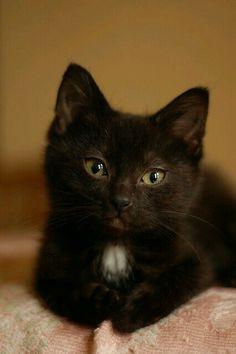 Looks like my little guy when he was a kitten