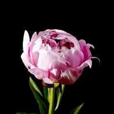 http://sentimientos-y-vivencias.blogspot.com/