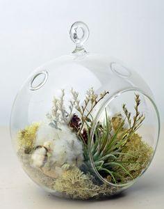 Air Plant Terrarium Hanging Glass Orb Terrarium by PinkSerissa