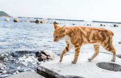 """The problem with Japan's """"cat islands"""""""