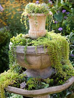 a great idea for plants if I ever turn off my fountain and couldn't maintain it.