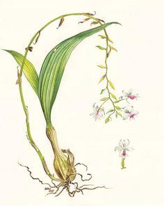 Botanic art on Behance
