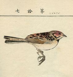 Japanese Meiji Sketchbook, Woodblock Printed Birds