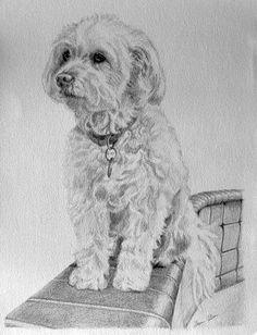 Pet Art, Drawing of Animal, Custom Pencil Portrait, Made to Order. $100.00, via Etsy.