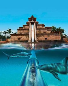 Bahamas looks scary but amazing