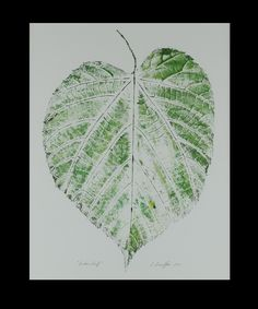 """""""Linden Leaf"""" 2011  This simple leaf is huge, filling the 10 x 13 paper!  It grew from the root of a linden tree trunk. To capture the texture and details, I carefully painted black ink directly on the veins, then applied green ink onto the rest of the leaf and made the direct print you see.  Double matted in ivory and shrink-wrapped.  SOLD"""