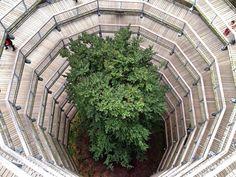 Einmal hinauf in die Baumkronen steigen – das begeistert nicht nur Kinder, sondern auch viele Erwachsene. 13 Baumwipfelpfade in Deutschland.