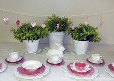 Pink and white cabbage wear with white plant pots and rose teacups White Plants, Winter Day, Pretty In Pink, Plant Pots, Ceramics, Teacups, Cabbage, Rose, Pot Plants