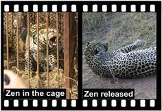Home of Leopard.tv Wildlife Magazine, Shayamanzi wildlife ranch and wildlife music September 2014, Wildlife, Articles, Tv, Animals, Animales, Animaux, Television Set, Animal