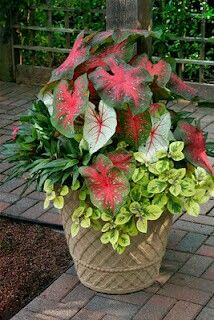 Colorful shade garden pots and plant ideas 07 flower pots, front porch, pla Potted Plants For Shade, Tall Plants, Outdoor Plants, Patio Plants, Bonsai Plants, Container Flowers, Container Plants, Container Gardening, Container Design