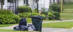 Trash Talk Renaissance, Budgeting, Community, City, Plants, Flora, City Drawing, Plant, Cities
