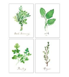 Set of four herb prints, 5X7, Kitchen decor, Food poster, Watercolor herb painting, Kitchen print, Kitchen art, Herb print, Green wall decor