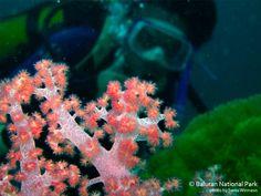 Underwater Landscape, Baluran National Park, Indonesia