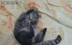 Can't Imagine What He's Dreaming (gif)