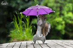 Backyard Squirrel Poses Adorably With a Tiny Purple Umbrella Provided by the Photographer