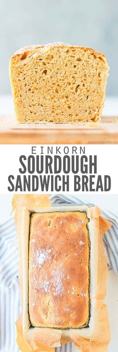 Easy No-knead Einkorn Sourdough Bread (the perfect sandwich loaf!) - This easy, no knead sourdough bread recipe makes the perfect sandwich loaf and has a soft crust! Made with healthy multigrain einkorn flour! Easy Sourdough Bread Recipe, Einkorn Bread, Knead Bread Recipe, Multigrain, Yeast Bread, Sandwich Loaf, Sandwich Bread Recipes, Homemade Sandwich, Homemade Breads