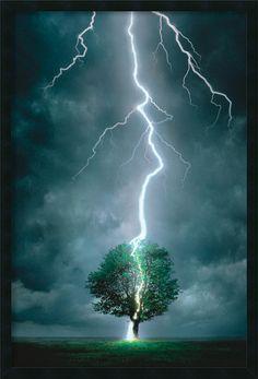 Lightning Striking Tree Framed Graphic Art