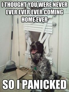 don't leave your dogs without telling them that you will be back soon so that they will not panic. Haha!