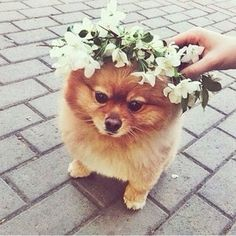 This will be my dog at my wedding lol