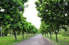 森林公園綠林小道