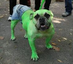 25 unbelievable Halloween costumes for dogs