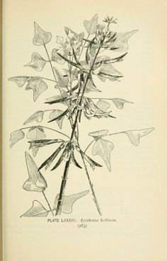 Southern wild flowers and trees, - Biodiversity Heritage Library