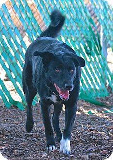 Red Bluff, CA - Border Collie Mix. Meet BUDDY a Dog for Adoption.