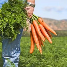 Local Sourcing Is Gaining Popularity http://www.escoffieronline.com/local-sourcing-is-gaining-popularity/