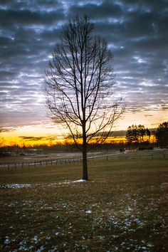 Tree in the Park at Sunrise